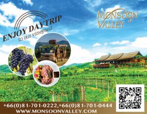 ไร่องุ่นมอนซูน แวลลีย์ วินยาร์ด Monsoon Valley Vineyard