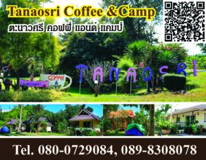 ตะนาวศรี คอฟฟี่ แอนด์ แคมป์ Tanaosri Coffee &Camp